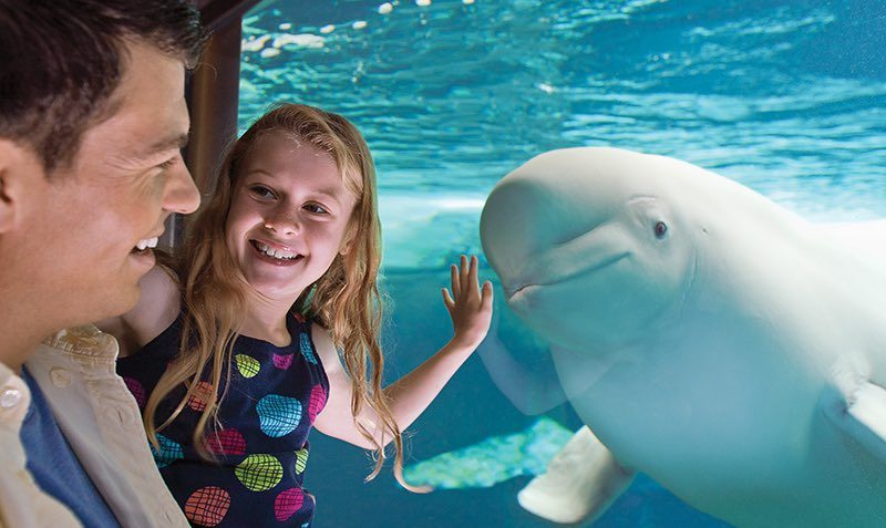 FREE Child Ticket Discount SALE at SeaWorld and Busch Gardens
